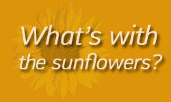 whatswiththesunflowers1